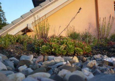 Dach- & Fassadenbegrünung